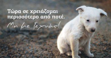 Τίθεται σε διαβούλευση το νέο σχέδιο νόμου για τα δεσποζόμενα κι αδέσποτα ζώα συντροφιάς.